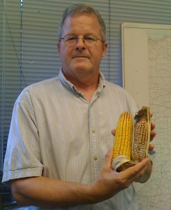 Purdue Extension pathologist Charles Woloshuk holds one good corn ear and one infected by Diplodia ear rot. (Purdue Agricultural Communication photo)