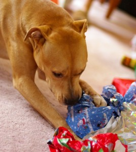 dog chewing up wrapping paper
